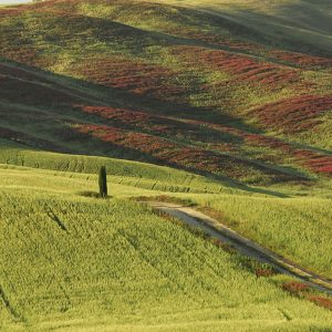 Umbria:  Italian Language School & Culture